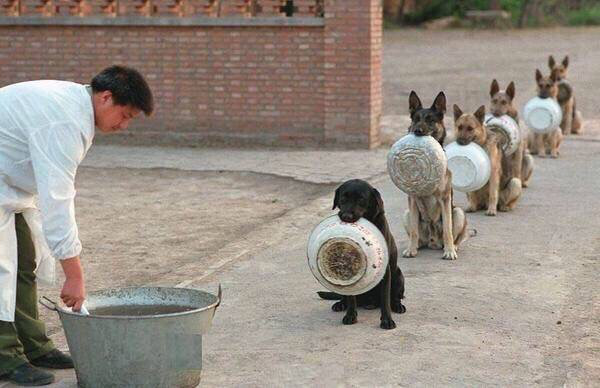 chinese dog queue