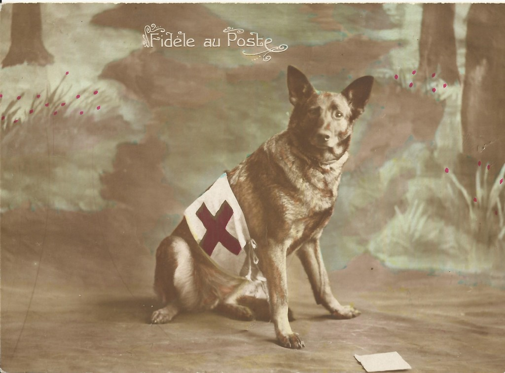 french-first-aid-dog